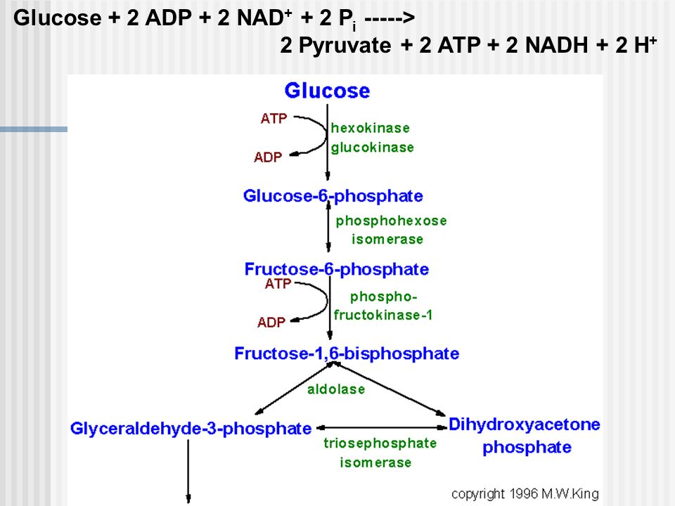 Glycolysis pathway diagram wiring diagram glycolytic pathway diagram wiring diagram summary of glycolysis diagram a detailed diagram of glycolysis carbohydrate metabolism ccuart Choice Image