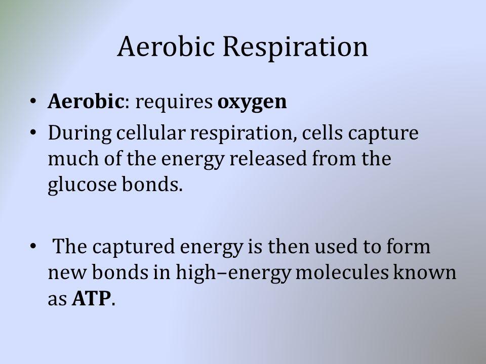 Cellular Respiration Mr. Mah Living Environment. Announcements ...
