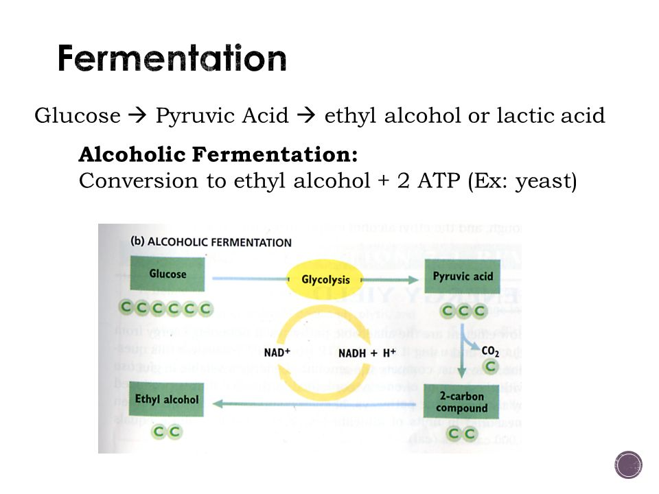 Glucose  Pyruvic Acid  ethyl alcohol or lactic acid Alcoholic Fermentation: Conversion to ethyl alcohol + 2 ATP (Ex: yeast)