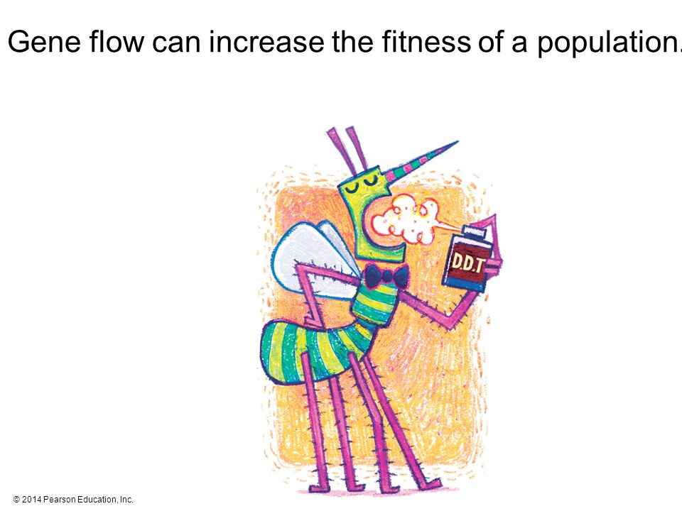 © 2014 Pearson Education, Inc. Gene flow can increase the fitness of a population.