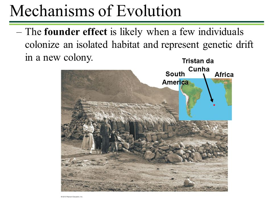 –The founder effect is likely when a few individuals colonize an isolated habitat and represent genetic drift in a new colony.