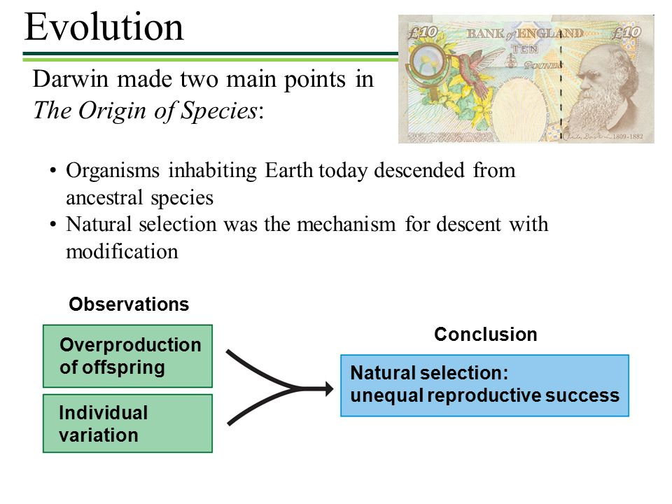 Darwin made two main points in The Origin of Species: Organisms inhabiting Earth today descended from ancestral species Natural selection was the mechanism for descent with modification Individual variation Overproduction of offspring Observations Natural selection: unequal reproductive success Conclusion Evolution