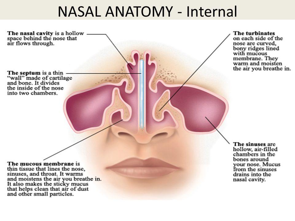 Inside Nose Anatomy Images - human body anatomy