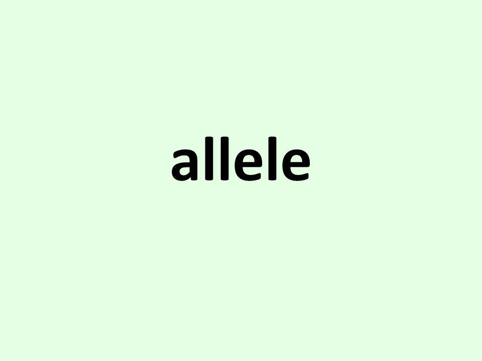 Allele. Alternate form of a gene gene variant autosome. - ppt download