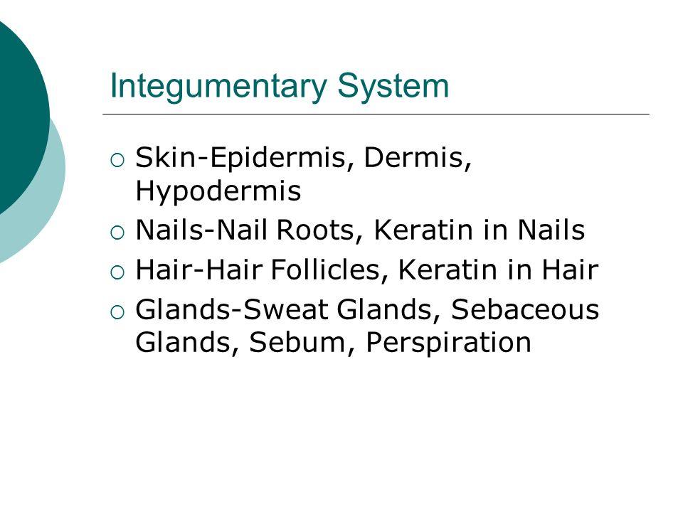 Integumentary System 4/29/2013. Integumentary System  Skin ...