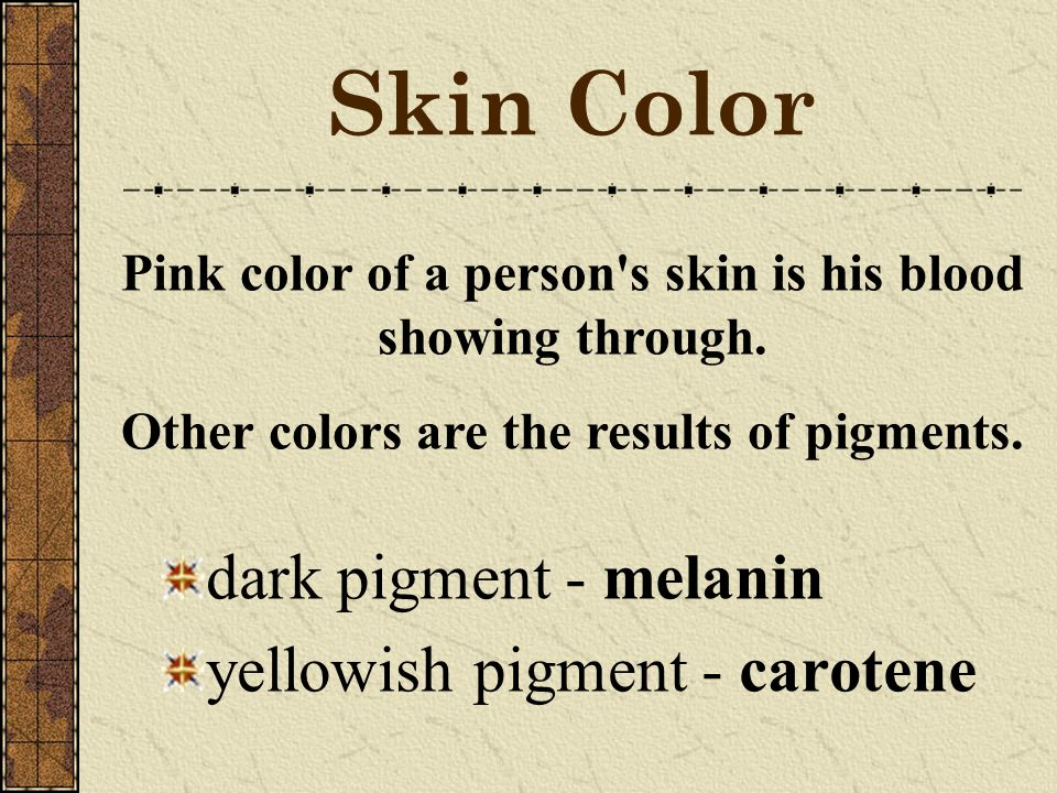 Skin Color dark pigment - melanin yellowish pigment - carotene Pink color of a person s skin is his blood showing through.