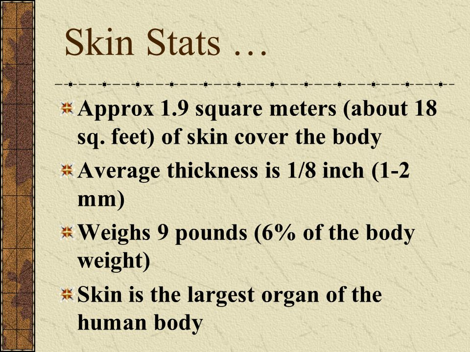 Skin Stats … Approx 1.9 square meters (about 18 sq.