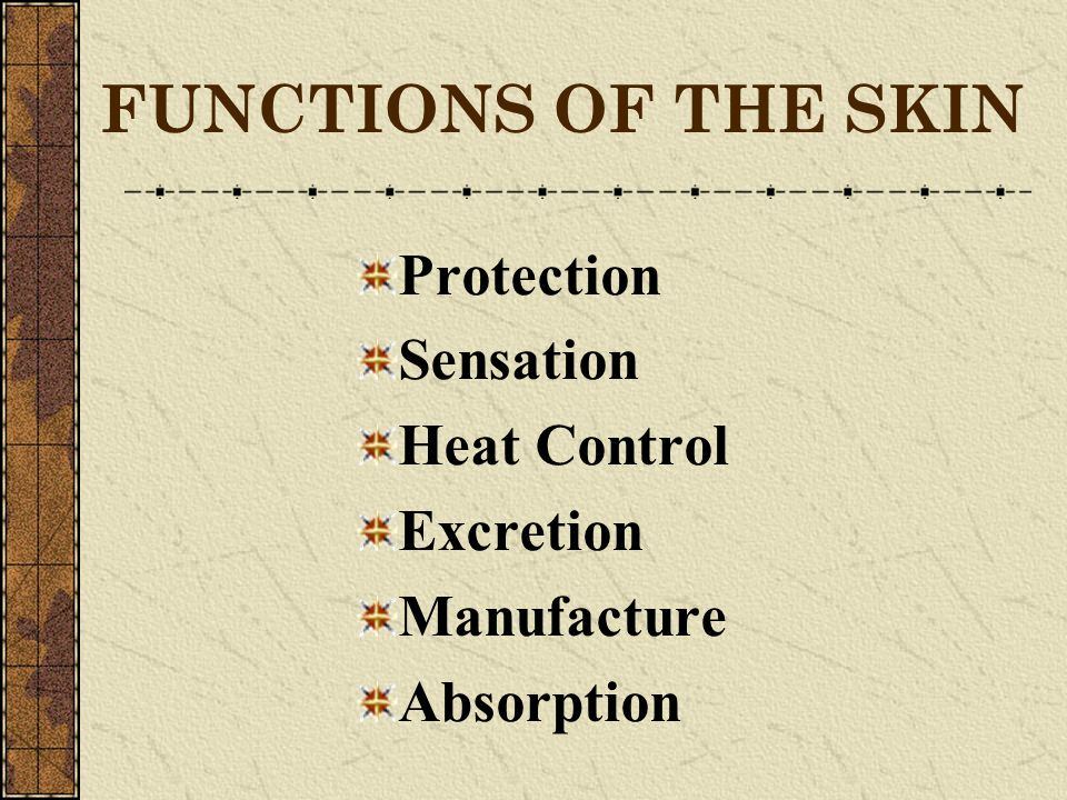 FUNCTIONS OF THE SKIN Protection Sensation Heat Control Excretion Manufacture Absorption