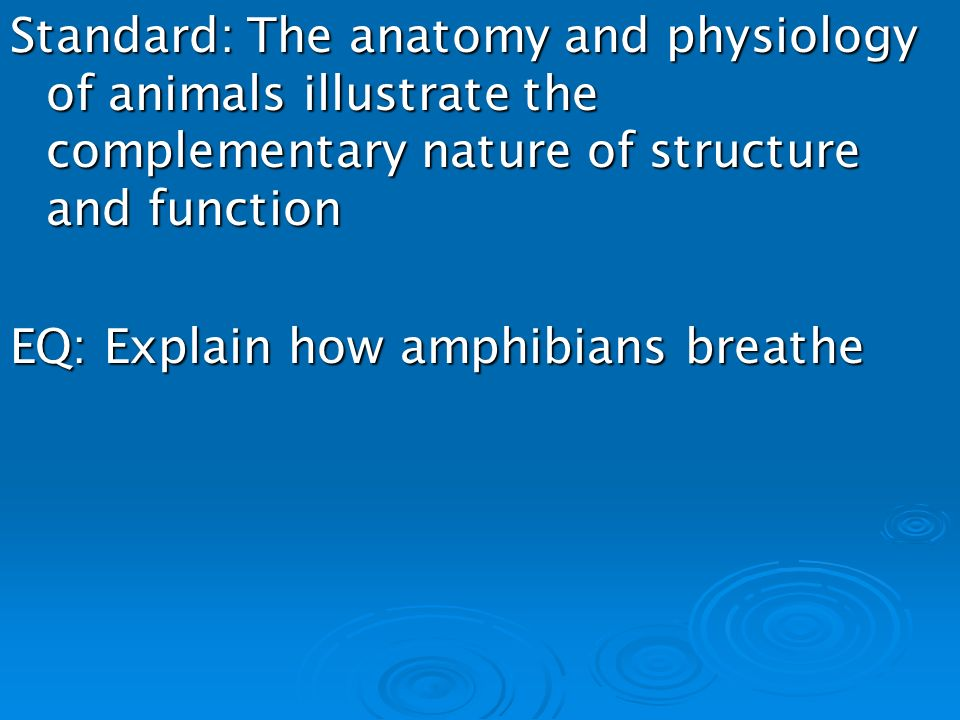 Chapter 15 Section 3 Amphibians. Standard: The anatomy and ...