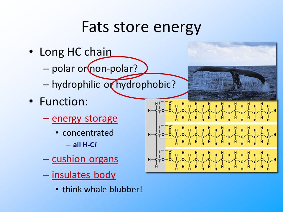 Building Fats Triglycerol – 3 fatty acids linked to glycerol – ester linkage = between OH & COOH hydroxylcarboxyl
