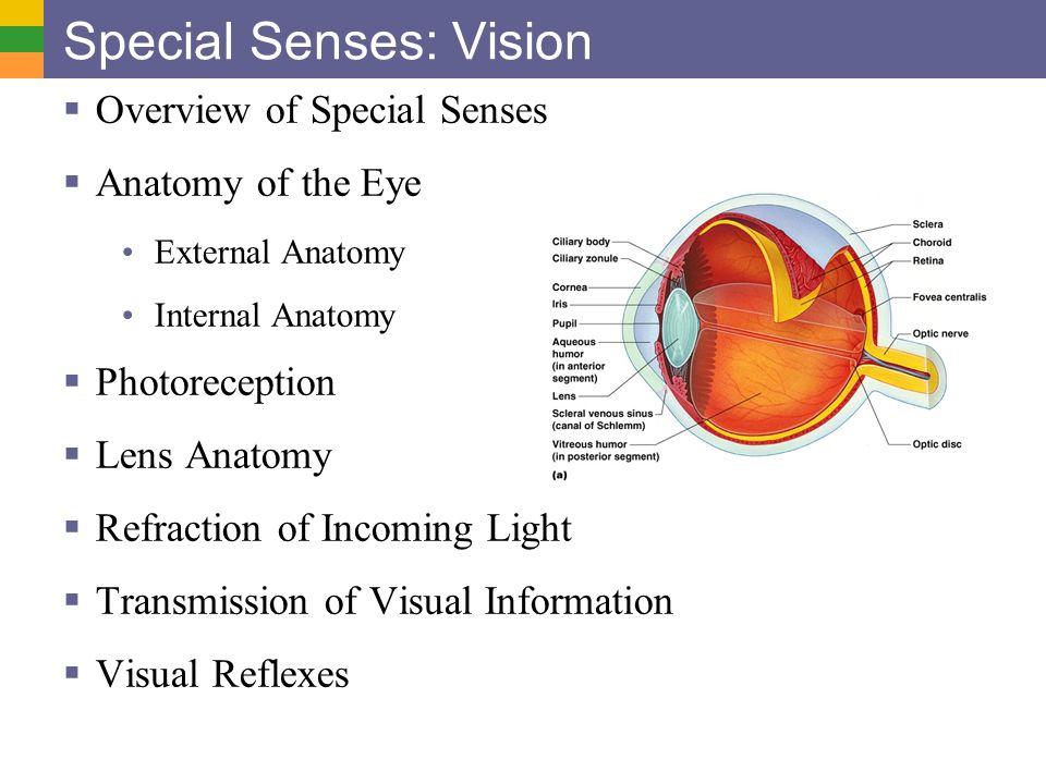 reflex and special senses