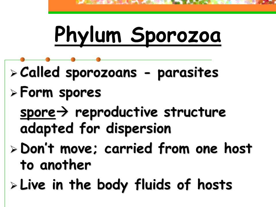 Phylum Sporozoa  Called sporozoans - parasites  Form spores spore  reproductive structure adapted for dispersion  Don't move; carried from one host to another  Live in the body fluids of hosts