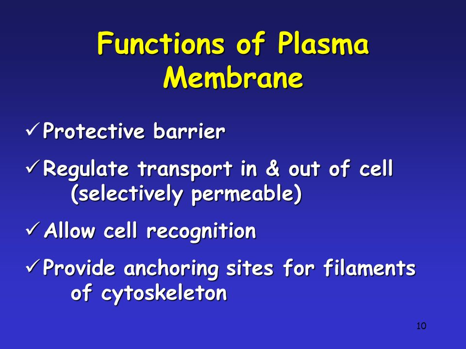 10 Functions of Plasma Membrane Protective barrier Regulate transport in & out of cell (selectively permeable) Allow cell recognition Provide anchoring sites for filaments of cytoskeleton
