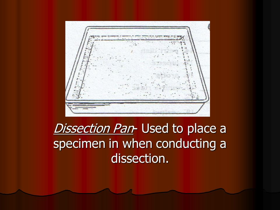 Dissection Pan- Used to place a specimen in when conducting a dissection.