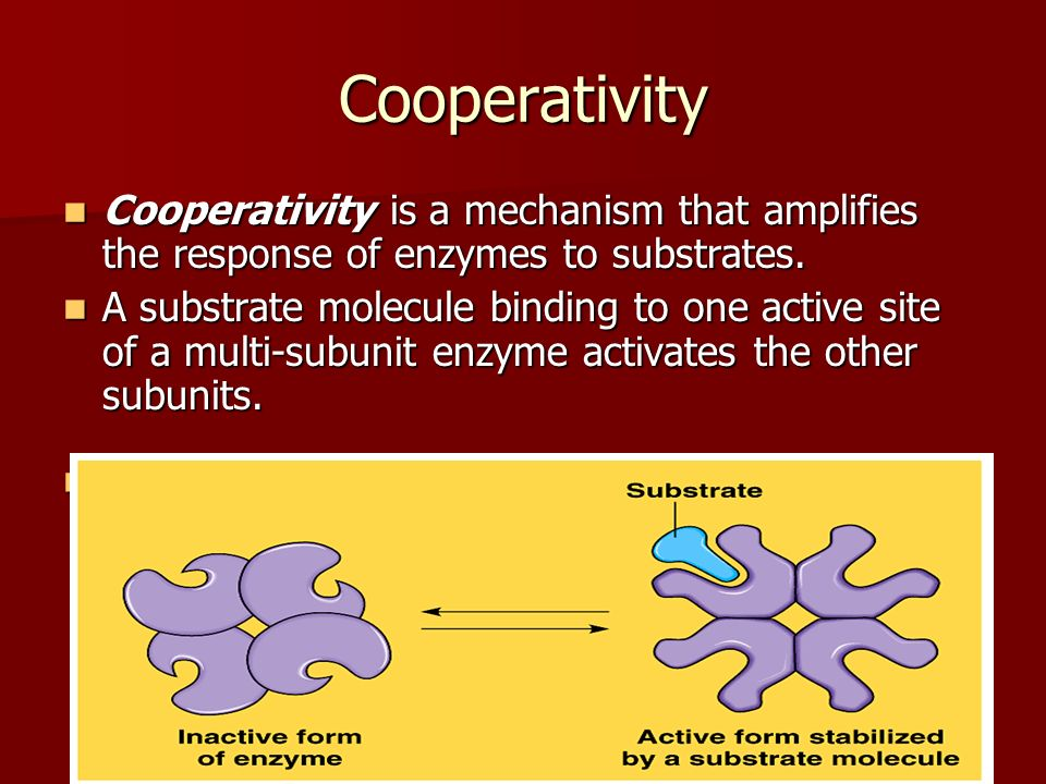 Cooperativity Cooperativity is a mechanism that amplifies the response of enzymes to substrates.