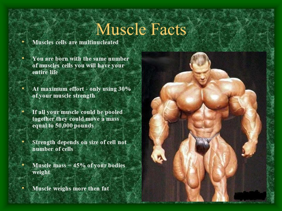 the muscular system and methods of movement functions movement, Muscles