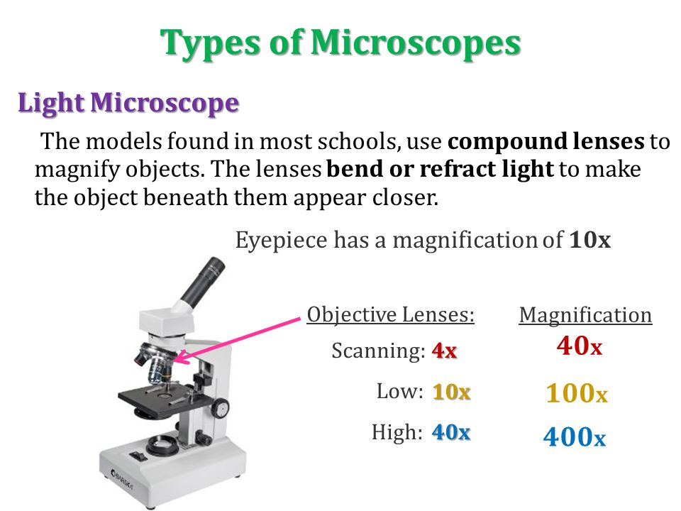 """introduction to the microscope 1839 schwann theorizes all animals are made up of cells 1855 virchow theorizes all cells are """"born"""" from other cells cell theory completed."""