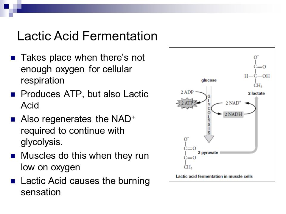 Print Lactic Acid Fermentation Definition S Equation Worksheet