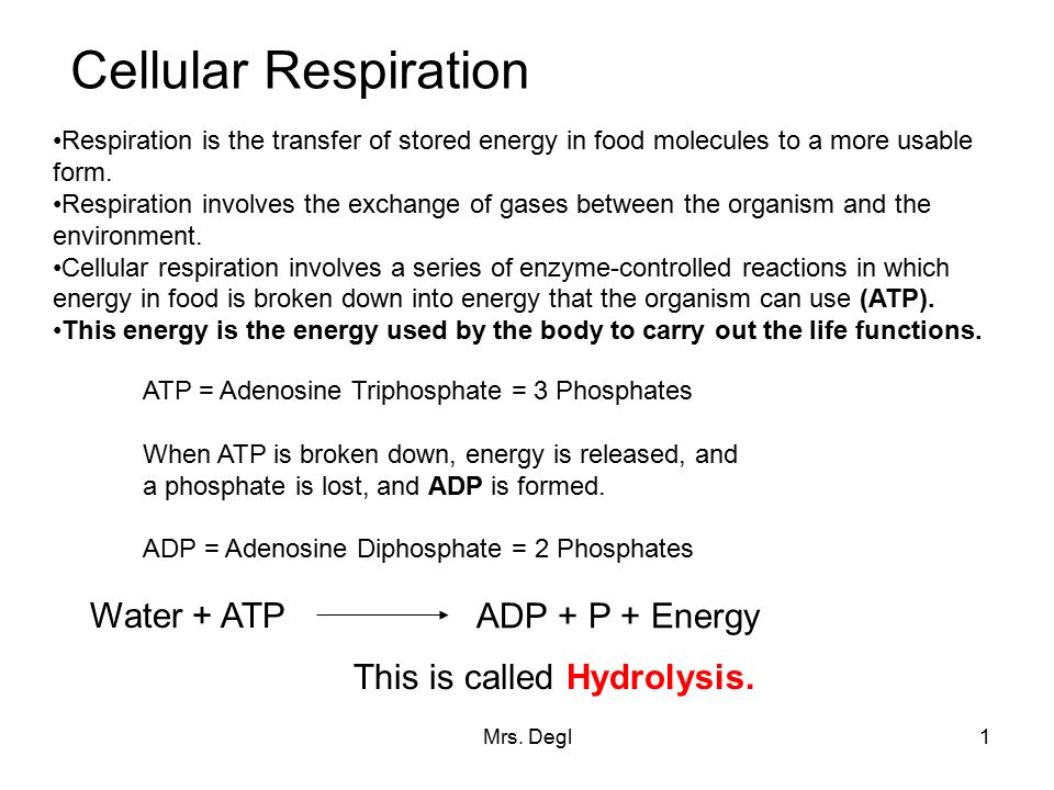 Mrs. Degl1 Cellular Respiration Respiration is the transfer of ...