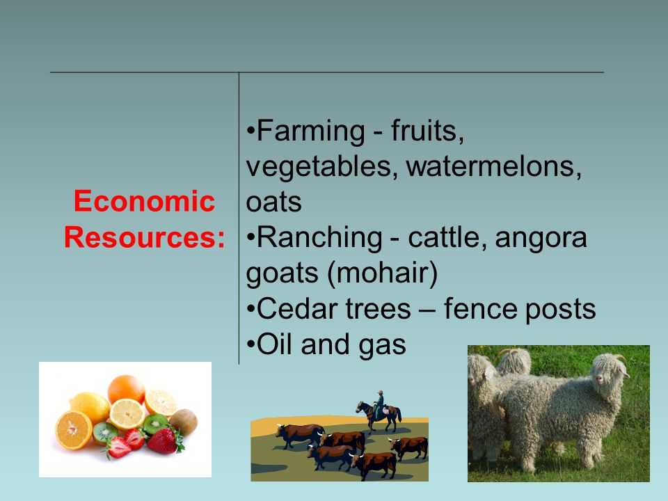 Economic Resources: Farming - fruits, vegetables, watermelons, oats Ranching - cattle, angora goats (mohair) Cedar trees – fence posts Oil and gas