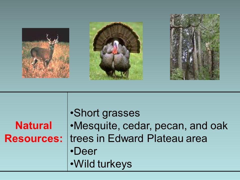 Natural Resources: Short grasses Mesquite, cedar, pecan, and oak trees in Edward Plateau area Deer Wild turkeys
