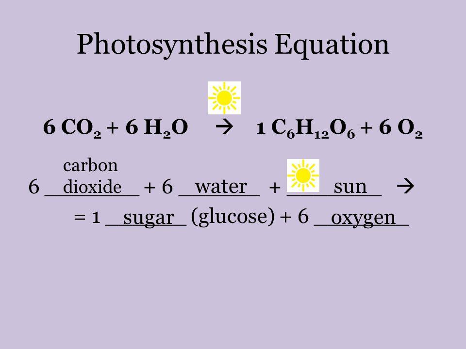 photosythesis equation
