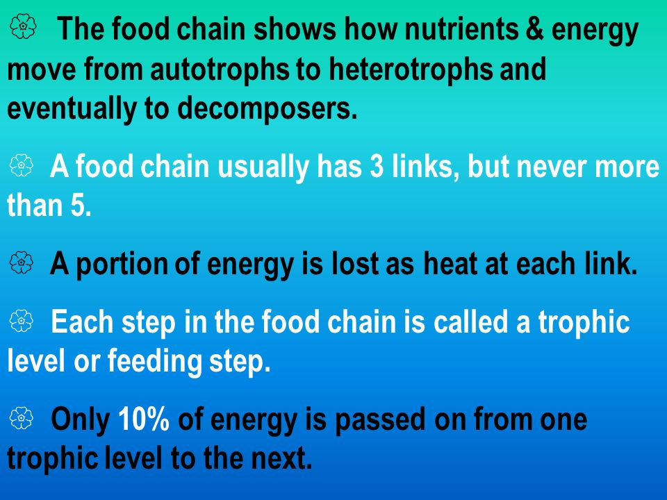  The food chain shows how nutrients & energy move from autotrophs to heterotrophs and eventually to decomposers.