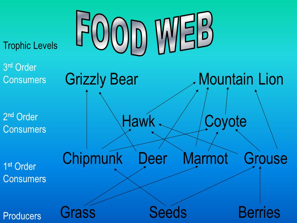 GrassSeedsBerries Chipmunk Deer Marmot Grouse Hawk Coyote Grizzly Bear Mountain Lion 3 rd Order Consumers 2 nd Order Consumers 1 st Order Consumers Producers Trophic Levels