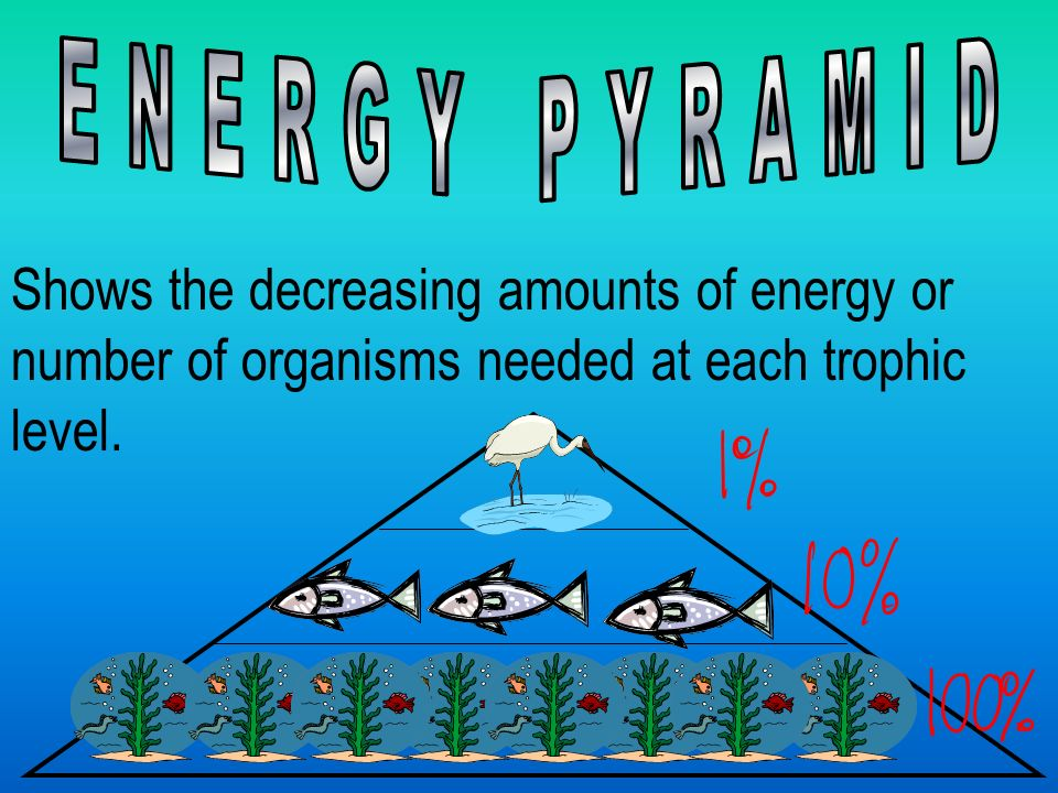 Shows the decreasing amounts of energy or number of organisms needed at each trophic level.