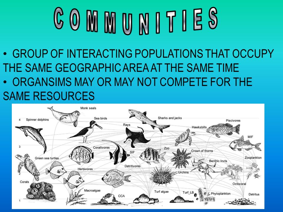 GROUP OF INTERACTING POPULATIONS THAT OCCUPY THE SAME GEOGRAPHIC AREA AT THE SAME TIME ORGANSIMS MAY OR MAY NOT COMPETE FOR THE SAME RESOURCES