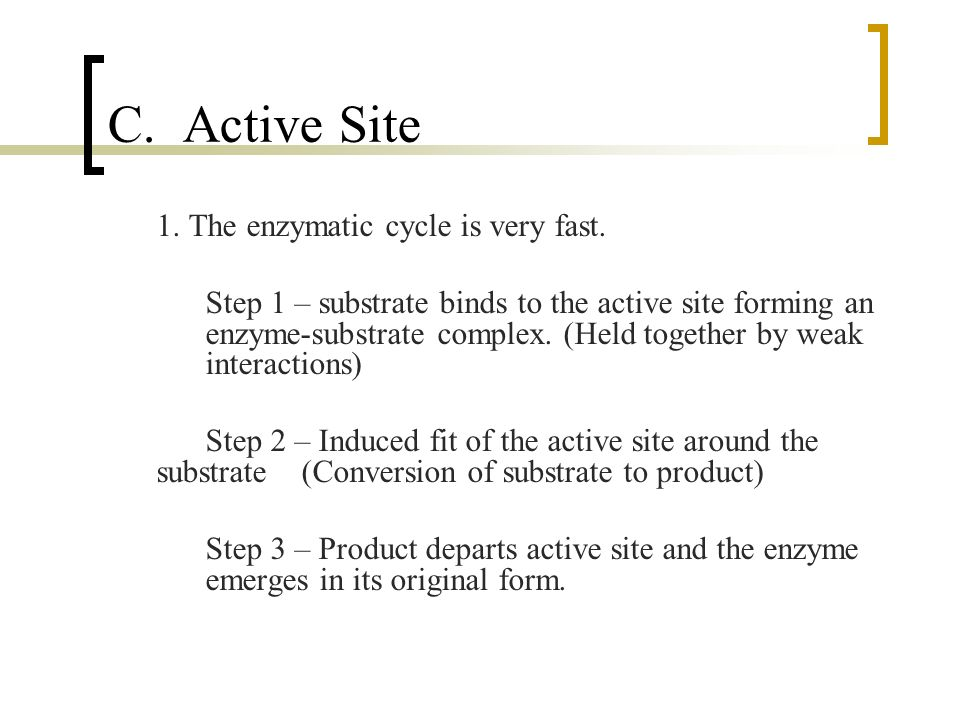 C. Active Site 1. The enzymatic cycle is very fast.