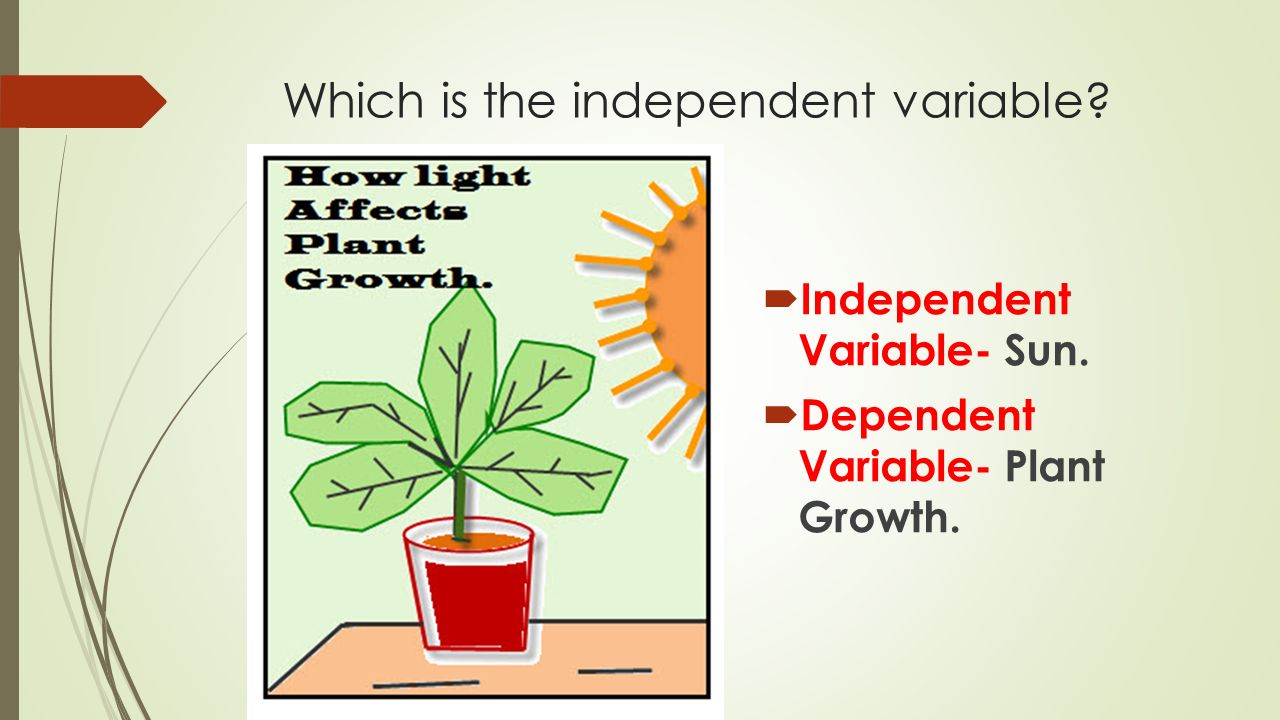independent variable dependent variable marketing essay virtual lab: dependent and independent variables worksheet 1 ecb refers to: e (european corn borer) a a genetically engineered plant that is resistant to insect pests b.