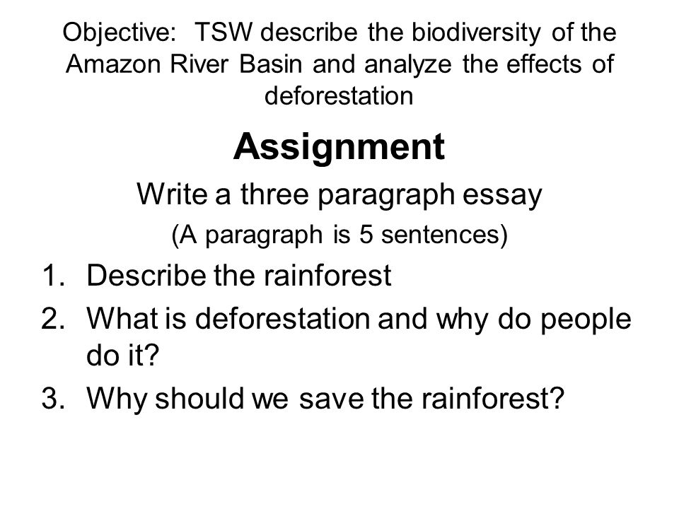 essays about rainforest