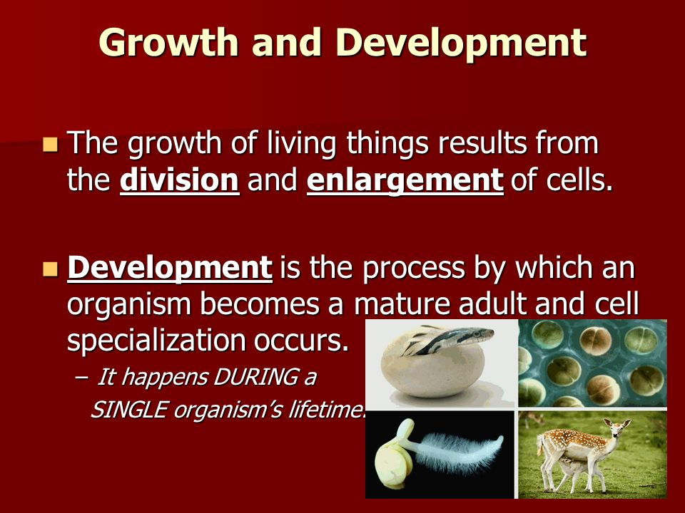 Growth and Development The growth of living things results from the division and enlargement of cells.