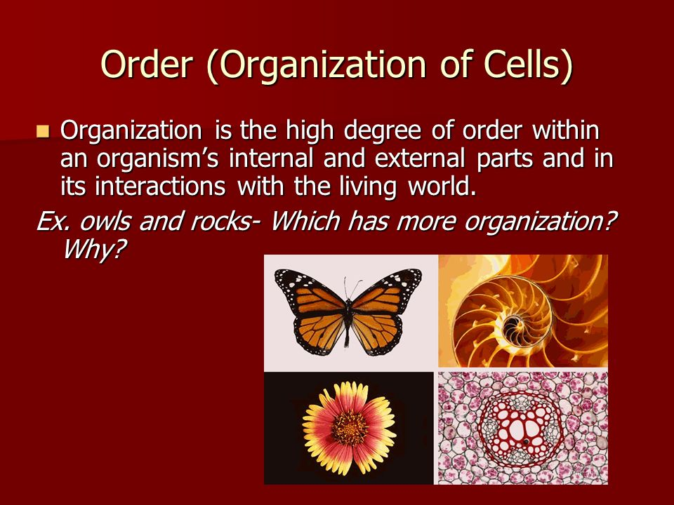 Order (Organization of Cells) Organization is the high degree of order within an organism's internal and external parts and in its interactions with the living world.