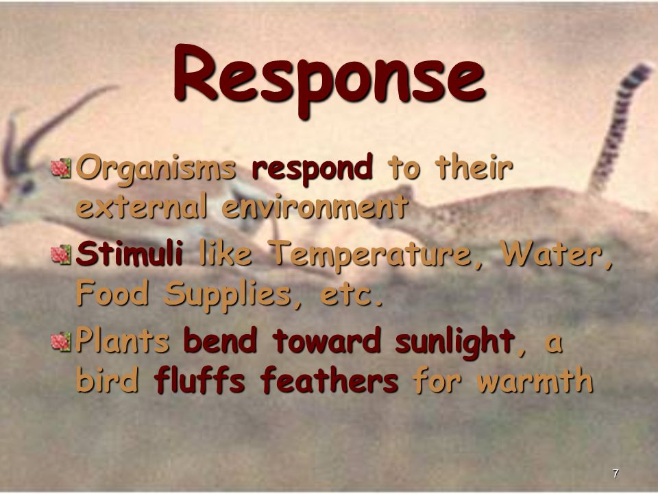 7 Response Organisms respond to their external environment Stimuli like Temperature, Water, Food Supplies, etc.