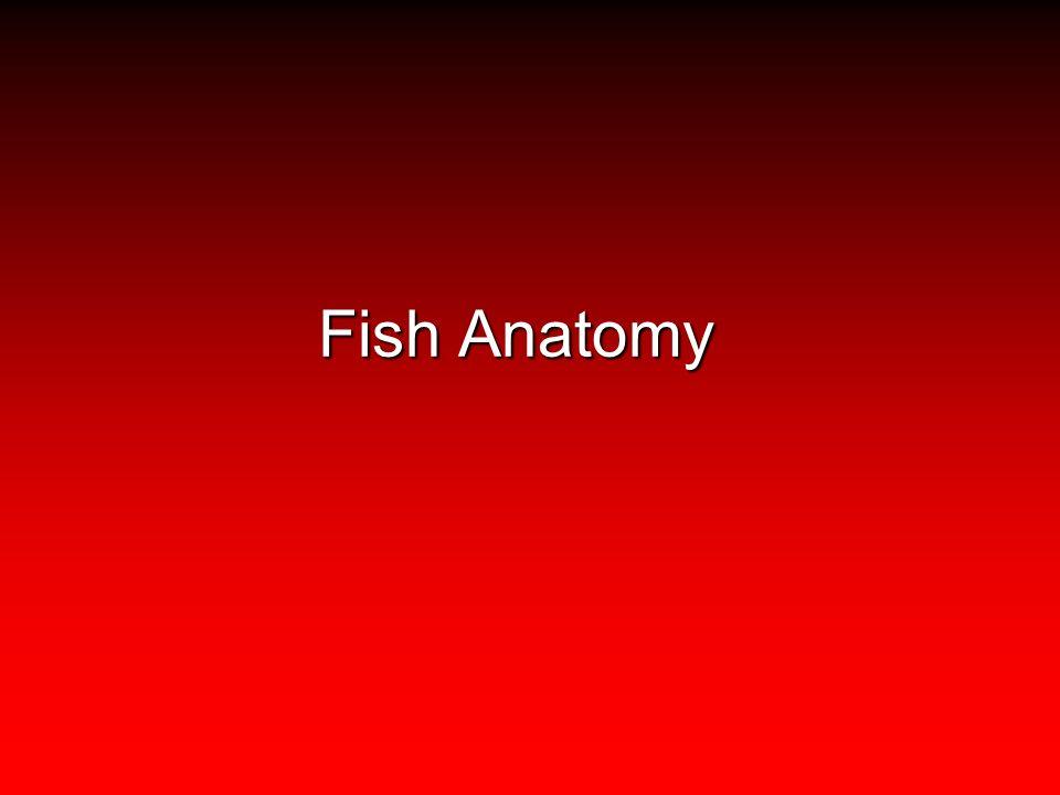 Gemütlich Define The Terms Anatomy And Physiology Bilder ...