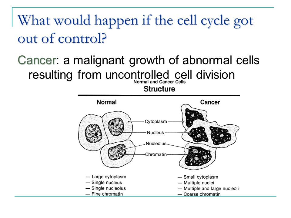 cancer and cell cycle control According to the proceedings of the national academy of sciences of the united states, cancer occurs when too many cells are allowed to grow in cancerous cells, the normal control mechanisms of the.