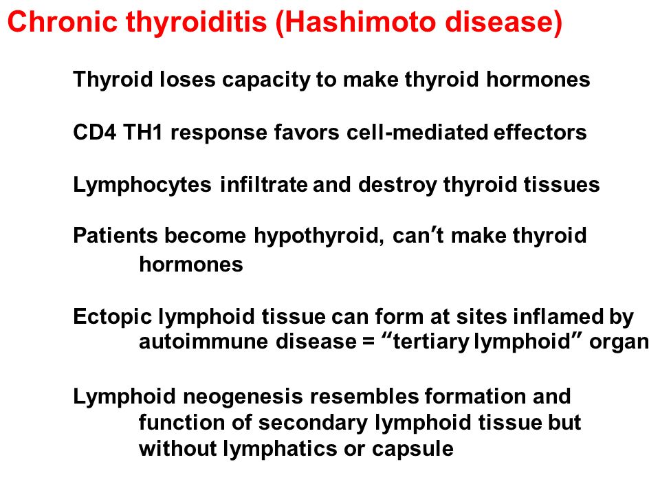 Chronic thyroiditis (Hashimoto disease) Thyroid loses capacity to make thyroid hormones CD4 TH1 response favors cell-mediated effectors Lymphocytes infiltrate and destroy thyroid tissues Patients become hypothyroid, can't make thyroid hormones Ectopic lymphoid tissue can form at sites inflamed by autoimmune disease = tertiary lymphoid organ Lymphoid neogenesis resembles formation and function of secondary lymphoid tissue but without lymphatics or capsule