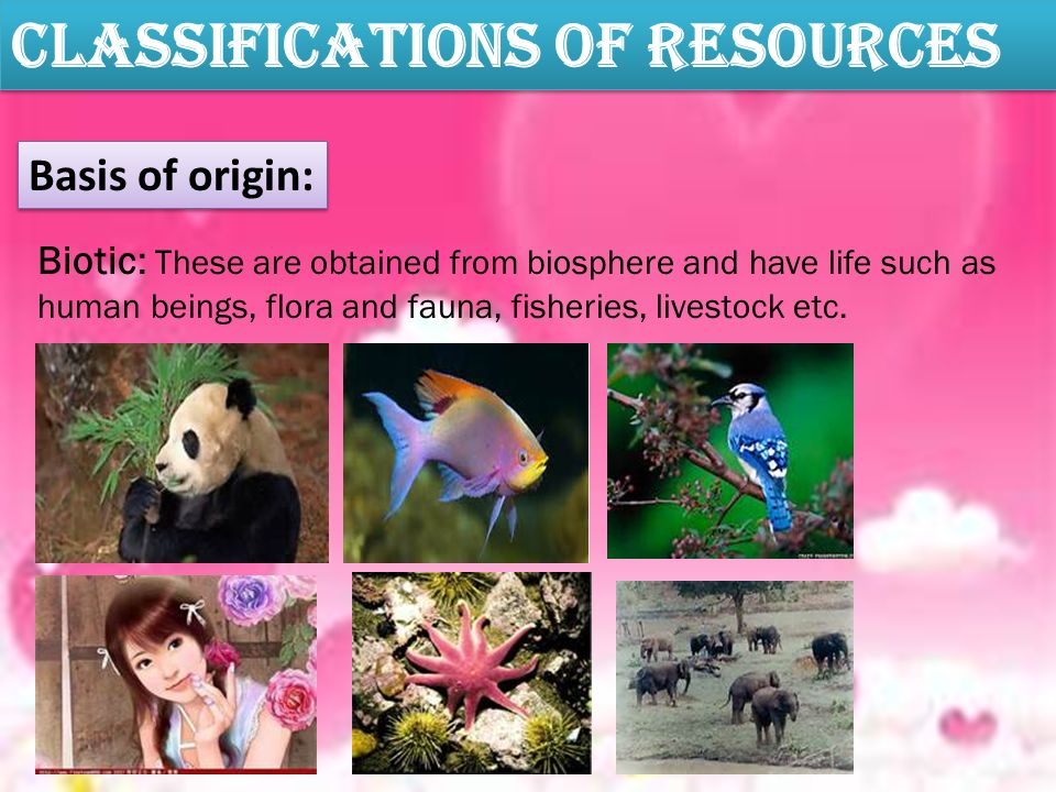 Classifications Of Resources Basis of origin: Biotic: These are obtained from biosphere and have life such as human beings, flora and fauna, fisheries, livestock etc.