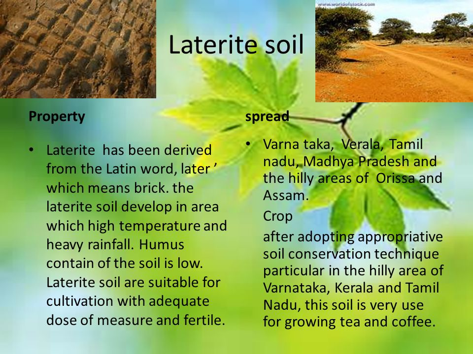 Laterite soil Property Laterite has been derived from the Latin word, later ' which means brick.