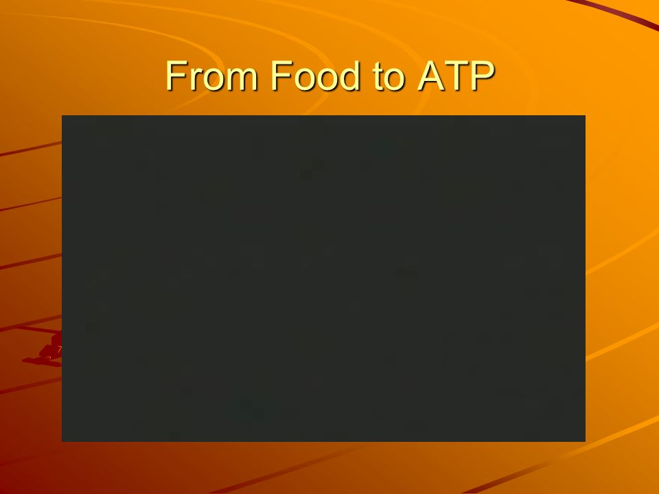 From Food to ATP