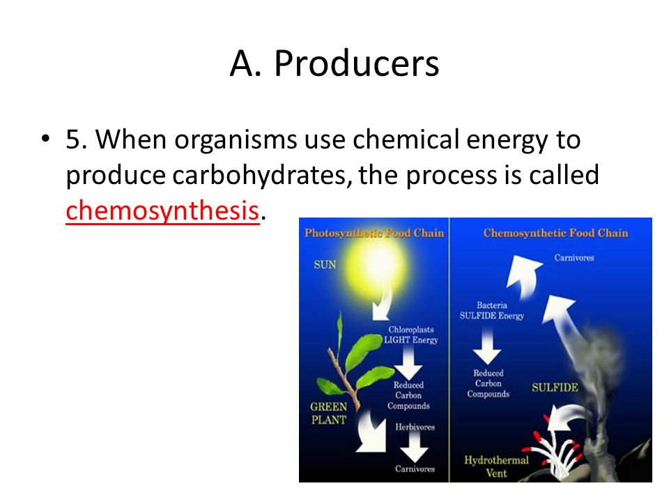 is sunlight an energy source for chemosynthesis Chemosynthetic bacteria means bacteria that can make chemical things (synthetic) basically any bacteria are chemosynthetic - they all product.