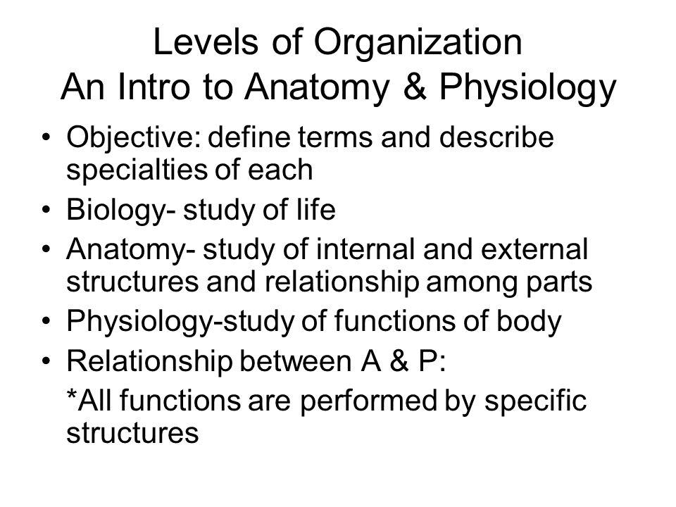 Berühmt Gross Anatomy Syllabus Zeitgenössisch - Menschliche Anatomie ...