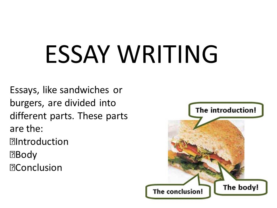 Components of a Good Essay Intro