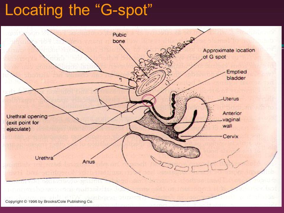 spot vagina diagrham g