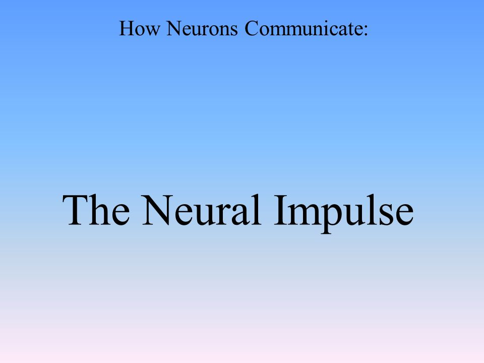 The Neural Impulse How Neurons Communicate: