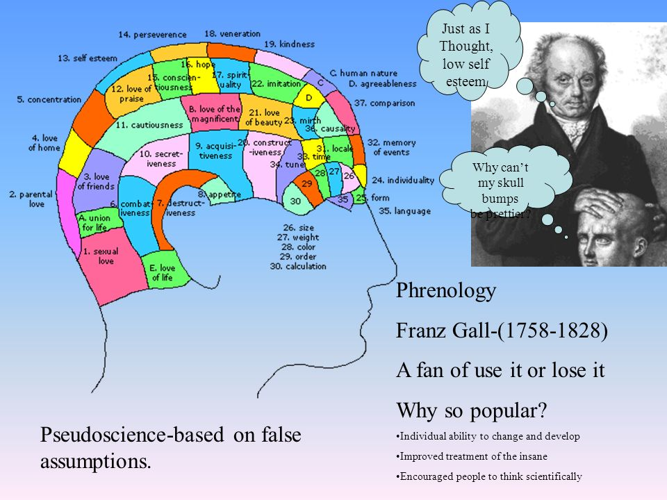 Phrenology Franz Gall-( ) A fan of use it or lose it Why so popular.