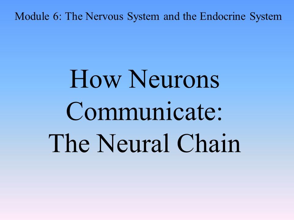 How Neurons Communicate: The Neural Chain Module 6: The Nervous System and the Endocrine System