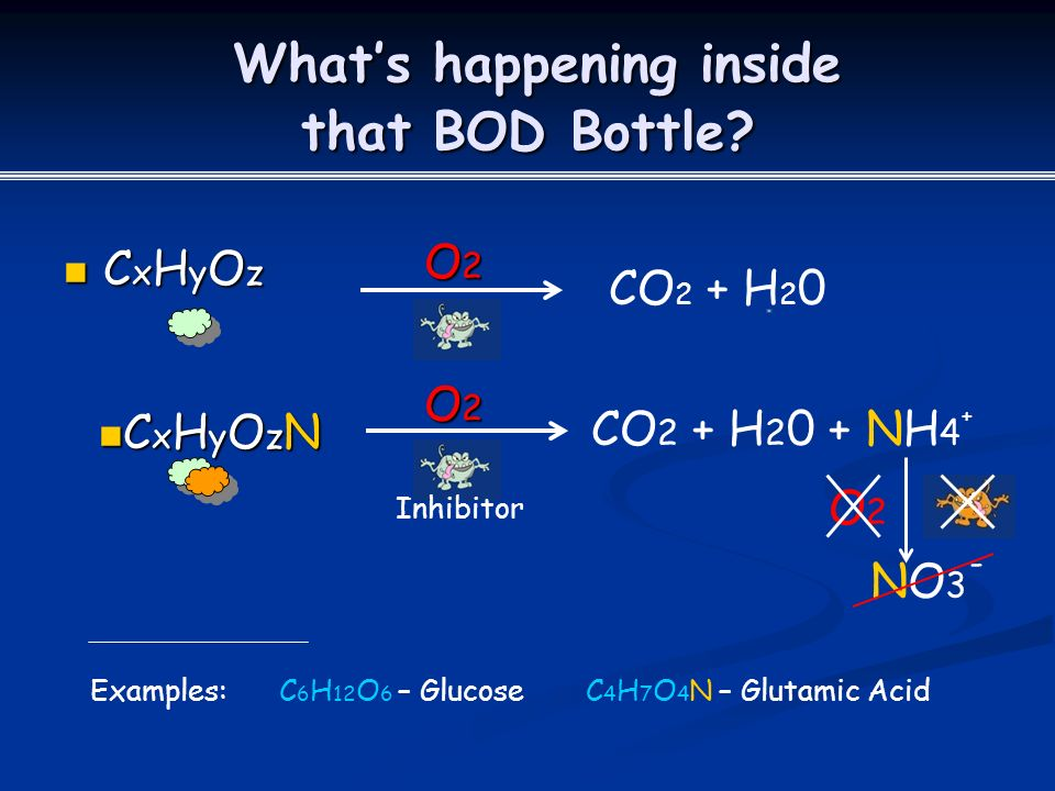 What's happening inside that BOD Bottle. What's happening inside that BOD Bottle.